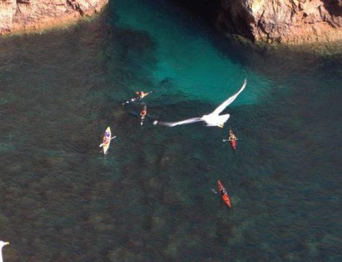 Cursos de Kayak de Mar